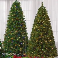 Christmas Trees At Family Dollar
