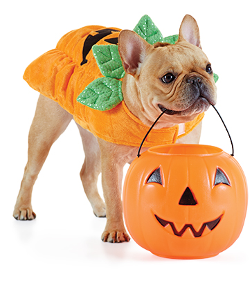 INSTOREEVENT-dog-pumpkin